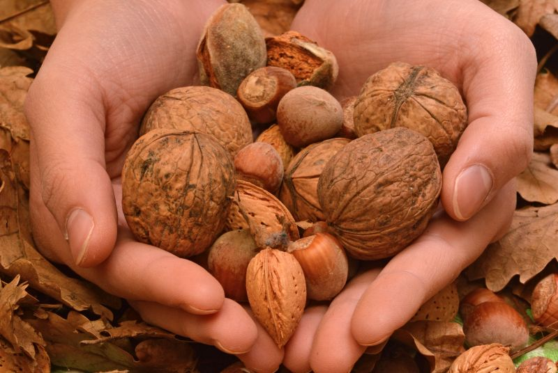 If you do want to go the nutty route during snack times, try these healthier nuts which also contain good fats in good amounts.