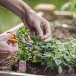 6 Steps to Grow a Garden Anywhere