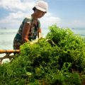 Is Seaweed the Next Superfood?