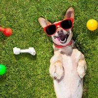 'WOOF'ENTINE's BRUNCH with your furry friends at Lakeside Chalet, Mumbai- Marriott Executive Apartme